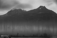 Fog Along Richardson Highway_MG_8847 (Alfred J. Lockwood Photography) Tags: alfredjlockwood alaska richardsonhighway fog trees treeskeleton monochrome bw mountains stream creek water morning twilight summer valdez marsh clouds