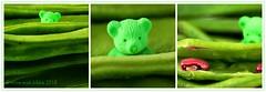 IN DE BONEN (Anne-Miek Bibbe) Tags: annemiekbibbe bibbe nederland 2018 canonpowershotsx280hs macro macromondays happymacromonday beans bonen indebonen speelgoed toy spielzeug giocattoli juguetes bringuedos jouets bear teddybear beertje teddybeer beer speelgoedbeer nounours minibeer minibear