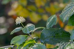 MS Bot Garten 20102018 063 (Dirk Buse) Tags: münster nordrheinwestfalen deutschland deu nrw flora garten green grün natur drop waterdrop nass nature outdoor pflanze garden