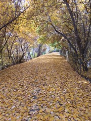 IMG_2792 (August Benjamin) Tags: provo provoriver provorivertrail fall utah mountains provocanyon fallcolors autumn trees leaves orem utahvalley jogging