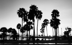 Sunset (Niwi1) Tags: travel bw sw spanien sundown sonnenuntergang silhouette islascanarias urlaub palme spain outdoor