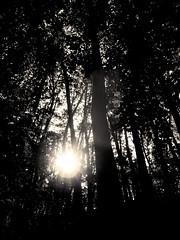 Danser avec le soleil - 01