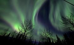 Glory in the Sky (Katy on the Tundra) Tags: northernlights auroraborealis aurora nightsky