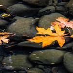 Molalla River in autumn thumbnail