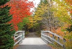 DSC03201 - Trail Bridge (archer10 (Dennis) 196M Views) Tags: timberlea sony a6300 ilce6300 18200mm 1650mm mirrorless free freepicture archer10 dennis jarvis dennisgjarvis dennisjarvis iamcanadian novascotia canada autumn fall colours trees
