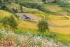 _J5K2471.0918.Dế Xu Phình.Mù Cang Chải.Yên Bái. (hoanglongphoto) Tags: asia asian vietnam northvietnam northwestvietnam landscape vietnamlandscape vietnamscenery scenery vietnamscene mountain flanksmountain terraces terracedfields harvest seasonharvest flower house home canon canoneos1dsmarkiii canonef2470mmf28liiusm tâybắc yênbái mùcangchải dếsuphình phongcảnh phongcảnhmùcangchải mùcangchảichảimùalúachín mùcangchảimùagặt ruộngbậcthang ruộngbậcthangmùcangchải núi sườnnúi ngôinhà hoa hoatamgiácmạch