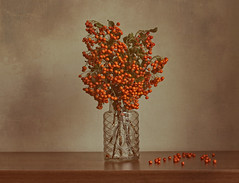 Firethorn (Anikó Lázár) Tags: firethorn bouquet autumn texture canvas seasonsflora smileonsaturday