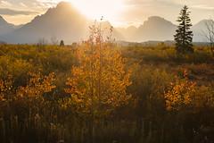 Grand Teton National Park (lloydie1963) Tags: autumn colours d610 dx nikond7200 sunset sunrise walks walk wildlife water usaroadtrip grandtetonnationalpark mirrorlake nikon nikon300mmf28vr2 nikon2470mmf28 leebigstopper grizzlybear bear deer usa grandteton