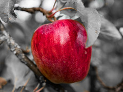 Good apple year (a_bygg) Tags: macro apple nature garden fruit red