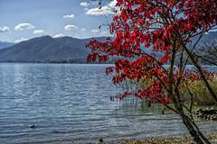 Herbst (Autumn) (St/W) Tags: herbst autumn leicam9p zeisscsonnar1550zm nikcep4 csonnart1550 tegernsee grund bayern bavaria deutschland germany