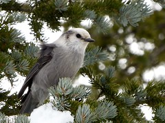 A Bird and the start of Winter (Thank You Please Photography) Tags: snow winter nature