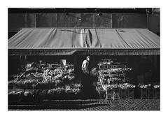 170219_00003_OM2n-kodak-Tri-X-400_bloem bloem (A Is To B As B Is To C) Tags: aistobasbistoc b belgië belgium antwerpen antwerp hoogstraat centrum bloembloem flowershop bloemenwinkel salesman shopkeeper flowers kraam street streetphotography olympus om2n analog film kodak trix 400 400asa bw blackwhite blackandwhite monochrome grain filmgrain sun shadow winter light city citylife urban scenery