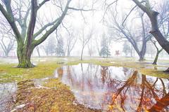 nature's language ῼ 25 (DeZ - photolores) Tags: royalcitypark guelphcanada reflection water trees park mist fog hdr nikon nikond610 nikkor nikkor1424mmf28 nature dez