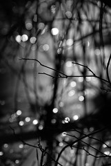 restless spirits (courtney065) Tags: nature landscapes pondscape nikond200 wetland wetlandpond water reflections waterreflections pondreflections spirits orbs bokeh blurred lines blackandwhite monochrome bw atmospheric spiritual magical netherworld gathering marshland mystery ghostly