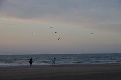 JLF16309 (jlfaurie) Tags: deauville normandie normandy france francia dqaniel mariefrance louisette mechas mpmdf jlfr jlfaurie pentax k5ii plage playa beach seaside mer mar sea