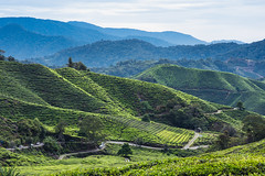 Cameron Highlands - Malaysia (Mathosse) Tags: green nature landscape cameron highlands malaysia malaisie paysage hill tea plantations light nikon