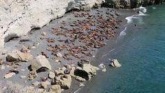 2018-102531 Sea Lions (bubbahop) Tags: 2018 antarcticatrip puertomadryn argentina punta loma natural reserve sealions animals movie film video