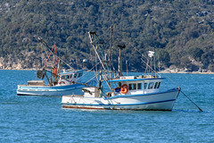 Patonga Fighing Boats (Merrillie) Tags: landscape nature australia boats newsouthwales sea nsw wharf water fishingboats patonga outdoors seascape briskbay centralcoast people waterscape