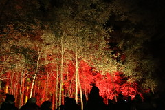 2018 - 4.10.18 Enchanted Forest (144) (marie137) Tags: forest lights trees show marie137 bright colourful pitlochry treeman attraction visit entertainment music outdoors sculptures wicker food drink family people water animation