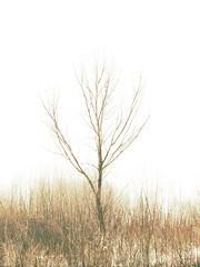 lonely (Darek Drapala) Tags: lonely lumix light panasonic poland polska panasonicg5 nature botanic natural abstract abandoned trees tree vistula