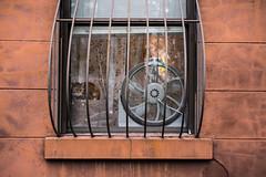 _RAG1344 (bigbuddy1988) Tags: cat pet portrait photography nikon d800 art new digital city urban nyc newyork usa