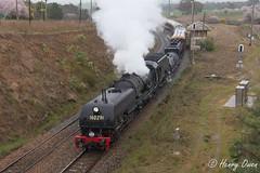 Demondrille Downpour (Henry's Railway Gallery) Tags: 6029 ad60class garratt steamlocomotive steamtrain heritagetrain thnsw transportheritagensw passengertrain 6s70 demondrille nswrailmuseum