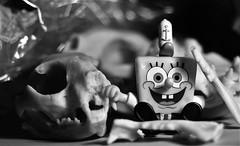 SpongeBob's Boneyard (Twila1313) Tags: skulls bones spongebobsquarepants spongebob skeletons carcass corpse dead death cartoon toy monochrome blackandwhite blackwhite bw sonynex5n petri55mmf18