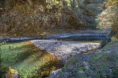 Molalla River in the fall (BLMOregon) Tags: blm bureauoflandmanagement molalla river oregon recreation autumn fall basalt clackamas county rosette columnar volcanic landscape nature scenic
