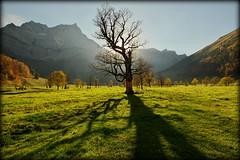 In your shadow (Eng, Austria) (armxesde) Tags: pentax ricoh k3 austria österreich tirol engintirol karwendel groserahornboden maple autumn fall herbst baum tree schatten shadow alps alpen berg mountain