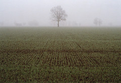 (Fabio Corò - PARMA) Tags: nebbia fog pianura padana emilia rollei 35 pellicola film kodak gold 200 iso fotografia analogica piacenza fabiocorò italy