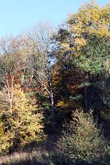 fall exuberance (Sue Elderberry) Tags: fall autumn foliage herbst trees leaves colors sunshine