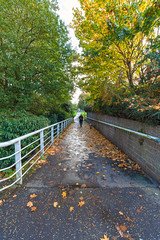 Walking the dog on an Autumn day (jimmy.cooper) Tags: autumnleaves dog walking