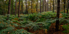 NP Veluwezoom - green autumn forest (Toon E) Tags: 2018 holland netherlands nederland arnhem veluwezoom veluwe npnationalpark forest autumn orange green panorama outdoor sony a7rii sonyfe1635mmf4