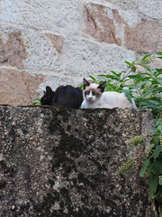 M2109299 E-M1ii 40mm iso200 f5.6 1_4s 0 (Mel Stephens) Tags: galicia holiday o grove spain 20180910 201809 2018 q3 3x4 tall olympus mzuiko mft microfourthirds m43 1240mm pro omd em1ii ii mirrorless animal animals domestic pet pets cat cats