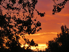 Branch Silhouette And Fiery Sky. (dccradio) Tags: lumberton nc northcarolina robesoncounty outdoor outdoors outside sunrise risingsun sky colorful colorfulsky tree trees treebranch treebranches branch branches foliage treelimb treelimbs october autumn fall morning saturday saturdaymorning goodmorning leaf leaves canon powershot elph 520hs silhouette beauty beautiful godshandiwork godscreation pretty nature natural fiery