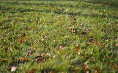 PA130027 (bnx_vs) Tags: penf olympus mzuiko 43 micro autumn