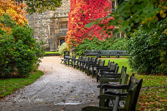 SJ1_2001 - The waiting room? (SWJuk) Tags: england unitedkingdom swjuk uk gb britain lancashire burnley home towneley towneleyhall path footpath benches seats empty virginiacreeper leaves foliage colourful 2018 oct2018 autumn autumnal autumncolours nikon d7200 nikond7200 nikkor70200mm rawnef lightroomclassiccc