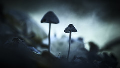 Afterglow (micke.vmix) Tags: carlzeiss zeiss d500 planart1450 mushroom