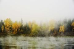 Autumn Mist (Sherrie St Hilaire) Tags: autumn river pnw fog mist trees fallcolor water newportwa sherriesthilaire october landscape pendorielleriver