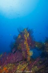 IMG_1425 (davide.clementelli) Tags: diving dive dives padi immersione immersioni ampportofino portofino liguria friends amici underwater underwaterlife sottacqua