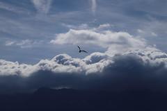 mouette4 (marcel.photo) Tags: möwe mouette vogel bird vevey schweiz switzerland genfers lac lémon himmel sky