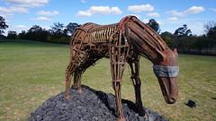 #01 Nth elevation in sun (spelio) Tags: actsep2018shawyassvalleynsw canberra australia sep 2018 rural art sculpture murrumbateman horse coal global warming
