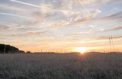 _DSC9535.jpg (thomasresch) Tags: sonneaufgang sun nordhaide panzerwiese nebel hartelholz sunrise sonne