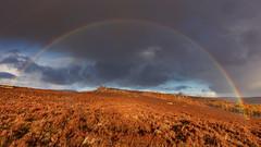 Rainbow at Over Owler Tor (Paul Newcombe) Tags: rainbow rain storm heather overowlertor mothercap uklandscape british nationalpark derbyshire uk england moors moorland october autumn sunset