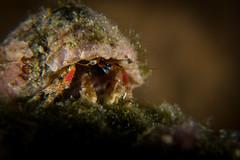 IMG_7159 (Gil Xavier) Tags: underwater scuba philippines canon fantasea g7xmk2 cebu moalbal turtlebay