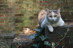 coffee with my friend Gracie Jo (rootcrop54) Tags: graciejo dilute calico female porch coffee neighbor neighbors neko macska kedi 猫 kočka kissa γάτα köttur kucing gatto 고양이 kaķis katė katt katze katzen kot кошка mačka gatos maček kitteh chat ネコ