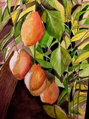 Quince On My Tree (www.stuartglloyd.co.uk) Tags: quince water colour color painting chesham stuart lloyd fruit tree bucks quinces