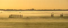 very Dutch (Wöwwesch) Tags: mist foggy sunrise sheep morning golden pastures fences rural dutch landscape