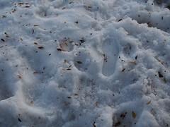 Footprints in the Snow (jfer21) Tags: legoland olympusem5 footprints snow nature jenfavorite