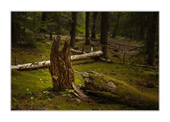 Forest floor (Krasne oci) Tags: forest northwest trees nature outdoors landscape woods pacificnorthwest mthood evabartos evergreen artphotography fineart